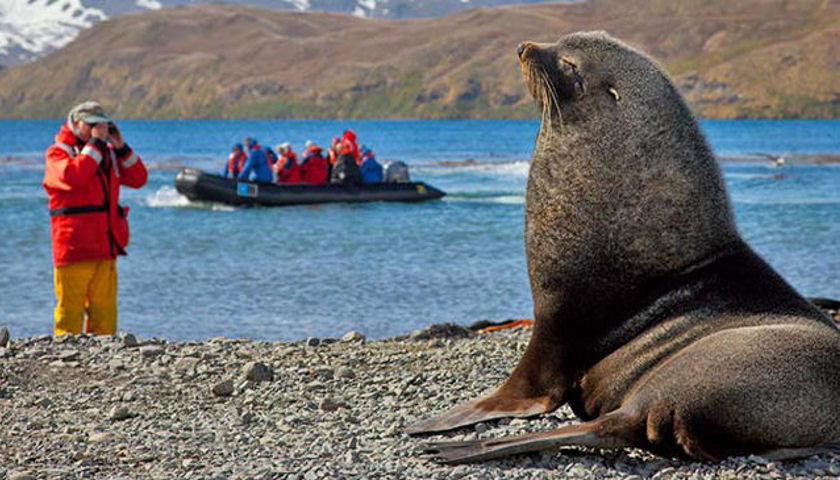 South Georgia island wildlife